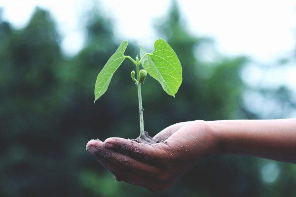 Der Verein und Naturkindergarten wächst nur mit helfenden Händen